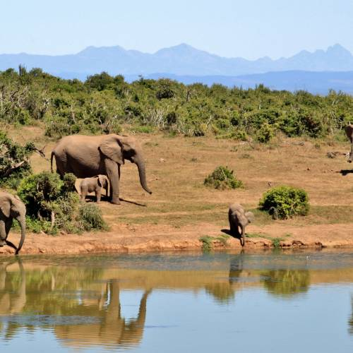 Budget Safaris in South Africa and Namibia